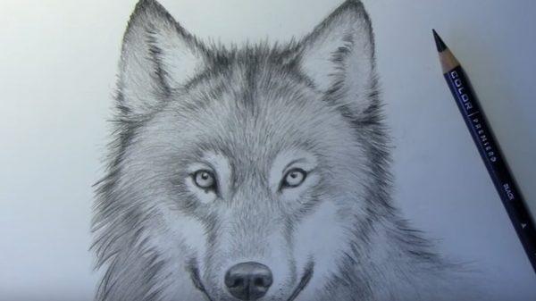 ציור של כלב